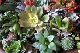 Sheilam succulent garden and nursery